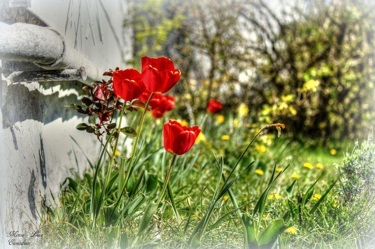 Blomster ved tårnet