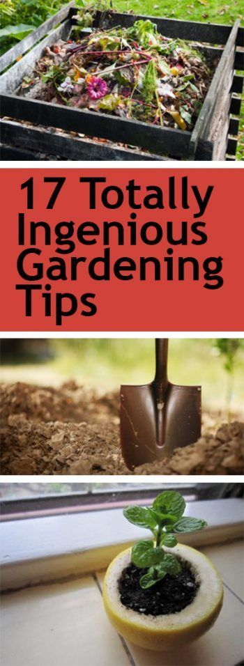 pin-17-totally-ingenious-gardening-tips