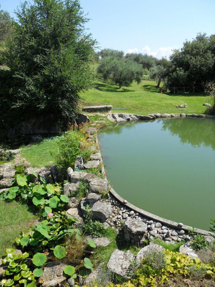giardino delle piante acquatiche, isola polvese umbria  www.perugiaflowershow.com