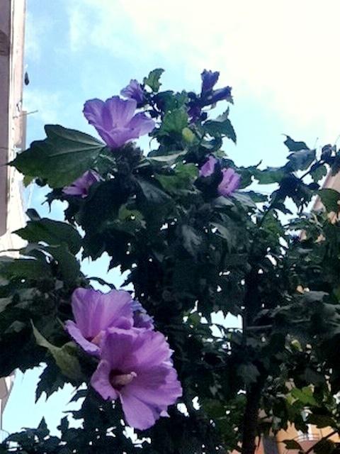 Flowers: Flower