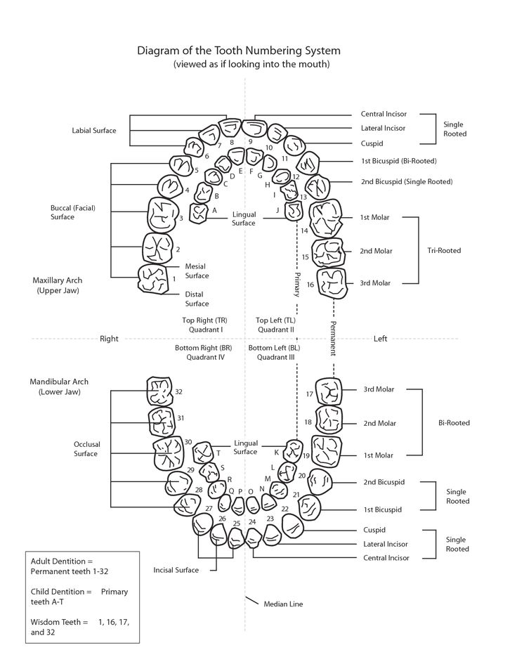 diagram of the tooth numbering system
