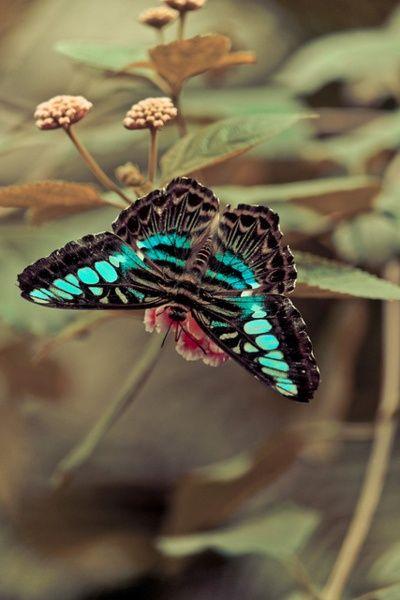 Papillon turquoise et noir. Cette image inspire le calme et la tranquillité.