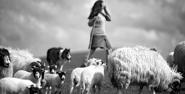 Cumbrian Shepherdess Alison O'neill. Images of her life rearing British sheep breeds for wool on Cumbrian fellside. We need more stories like this.