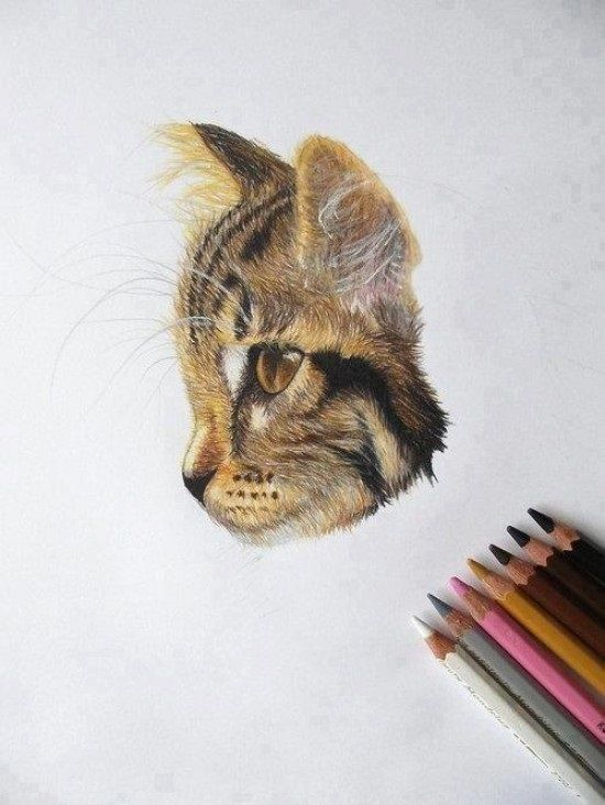 drawing colored pencil