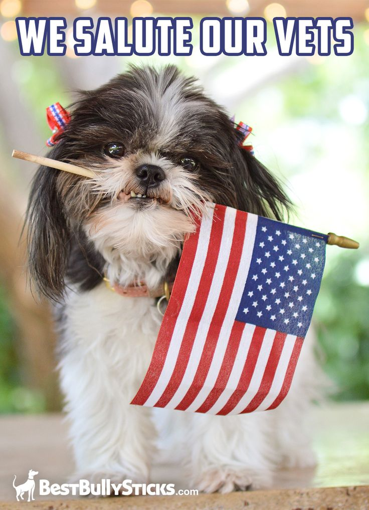 Veterans Day and every day, Best Bully Sticks honors our active and retired military. That's why we offer a discount to our men and women who have served.