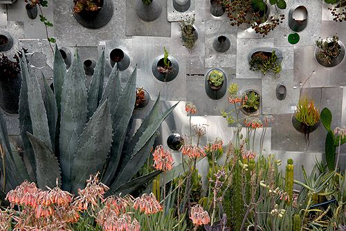 Emmanuel Donval made a vertical garden out of salvaged metal roof vents and filled them with drought tolerant succulents at his driveway garden in downtown Napa.