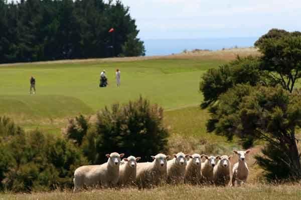 New Zealand luxury tour farm to table cuisine