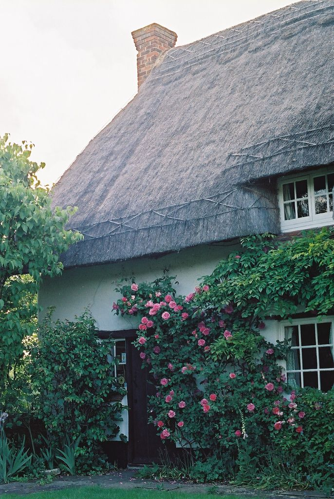 Thatched cottage with lovely climbing roses