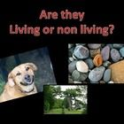 Use this powerpoint to introduce features of living things. The slides have a particular thing on it where the children need to decide if it is liv...
