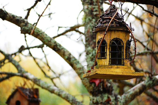 109 best birdhouses images on pinterest birdhouses for Different types of birdhouses