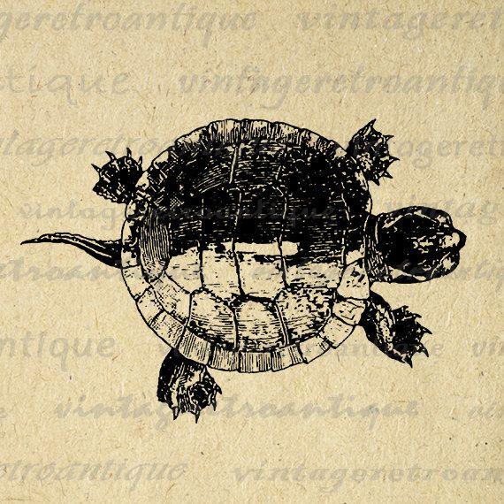 Printable Tortoise Turtle Graphic Download Illustration Digital Image Vintage Clip Art Jpg Png Eps 18x18 HQ 300dpi No.3097 @ vintageretroantique.etsy.com