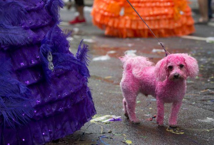 """Bunter Hund: An der Parade """"Pride in London"""" nahmen am Samstag rund 20.000 Menschen (und auch manch ein Vierbeiner) teil. Sie zogen teils bunt verkleidet durch die Innenstadt und ließen sich auch von Regenschauern nicht am Feiern hindern. Ebensowenig ließen sich die Besucher davon abhalten, ihre Haustiere passend zu stylen. Mehr Bilder des Tages auf: http://www.nachrichten.at/nachrichten/bilder_des_tages/cme10133,1088087 (Bild: Reuters)"""