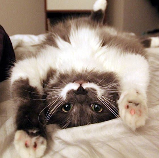 gatti divertenti - animali