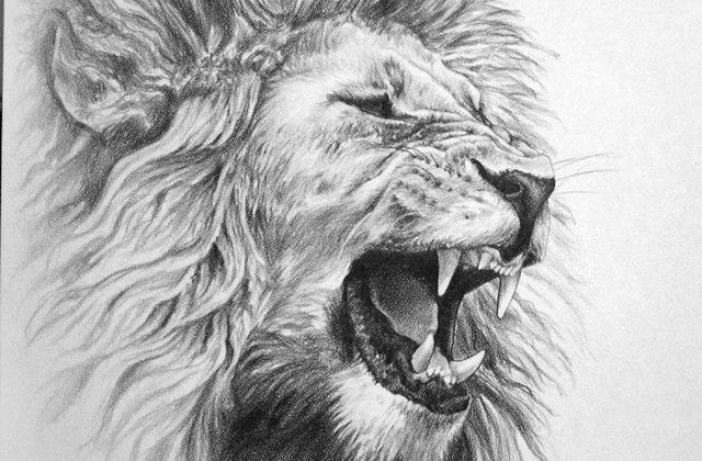 Awesome Drawings Of Lions Roaring Lion Pencil Drawing On Pinterest Mens Lion Tattoo Lion Sketch Lion Tattoo This roaring lion has shown up a few times in the flames. lions roaring lion pencil drawing
