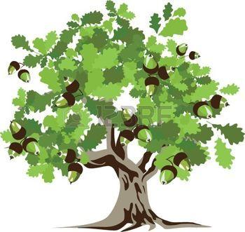 eiche blatt: Große grüne Eiche Illustration Illustration