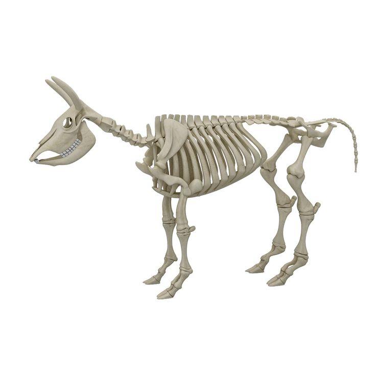 Cow Skeleton 3D Model - 3D Model