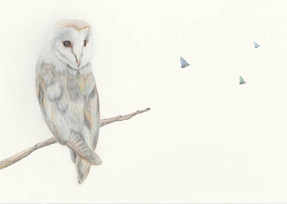 Owl and butterflies  fine art print/ children's room
