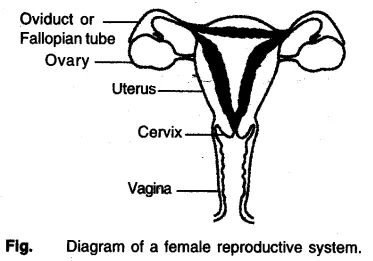 How do Organisms Reproduce Class 10 Notes Science Chapter
