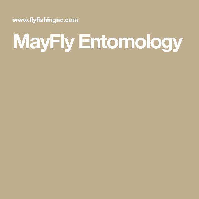 MayFly Entomology