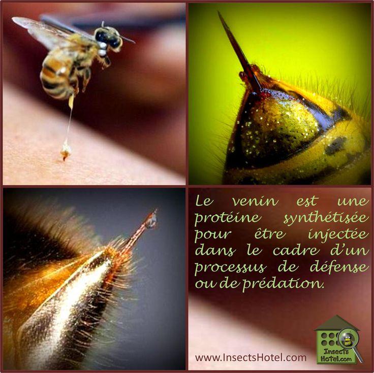 #Venins #insectes #InsectHotel #insecte #nature #biologie #animal #animaux #biodiversité #biodiversity #faune #wildlife www.InsectsHotel.com