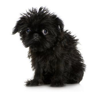 I must have you!