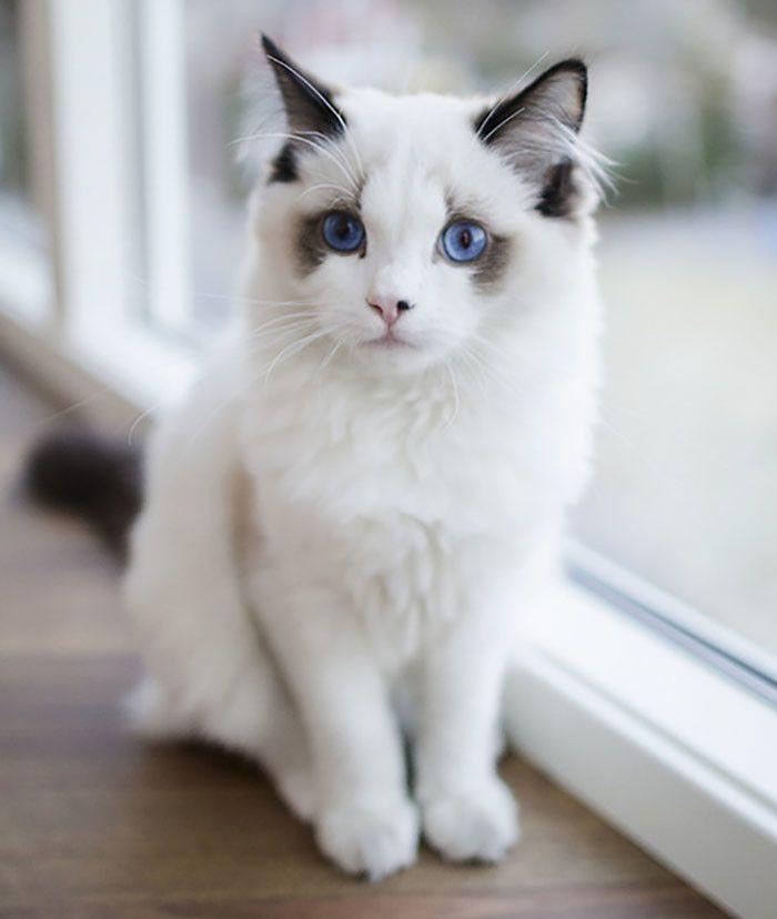 Кот с глазами цвета океана.