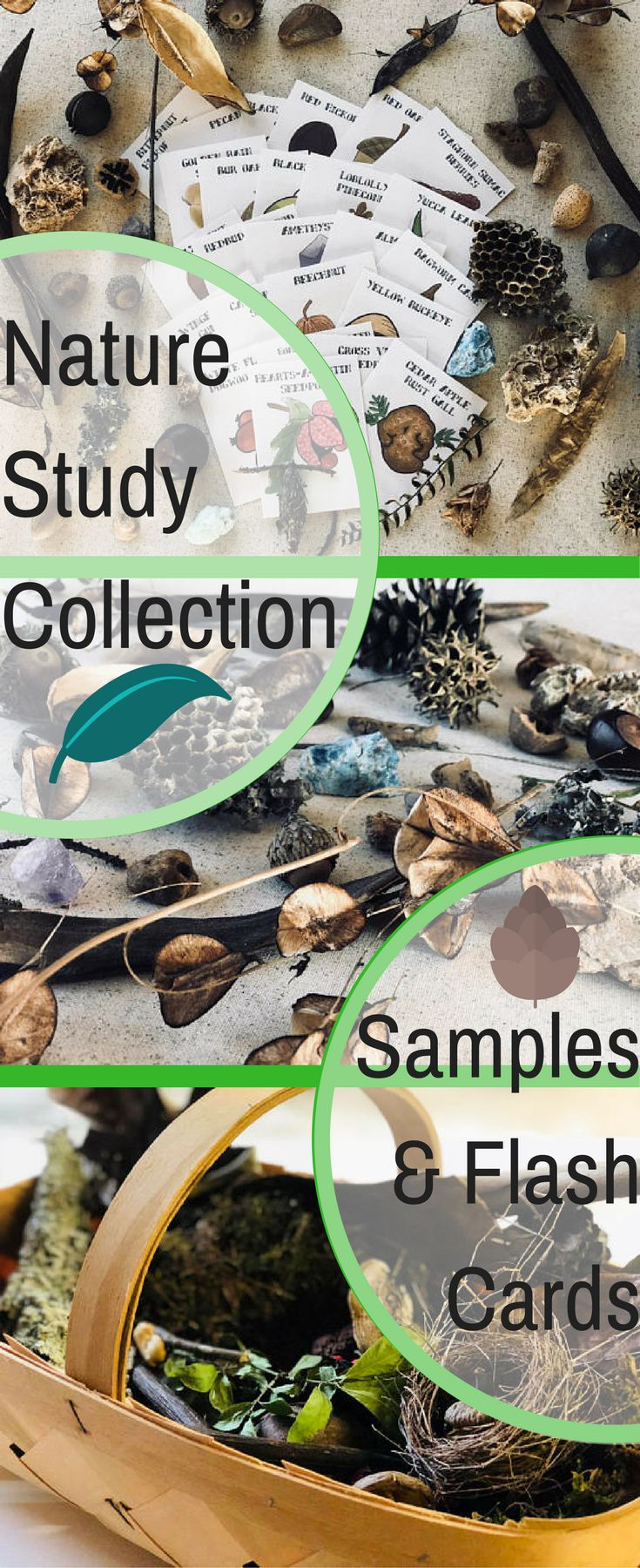 Nature Study Collection with Identification Flash Cards - Each collection contains at least 10 unique items. Rocks, minerals, shells, bones, nuts, berries, roots, dried leaves and flowers, snake skins, seed pods, lichen, moss, and much more. #homeschool #science #montessori #charlottemason #ad