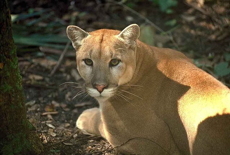 Stop Developers From Killing Florida Panthers