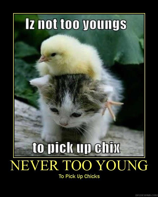 Never Too Early Pick Chicks