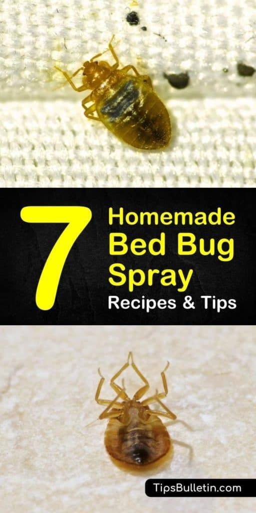 Bed Bug Bugs Homemade Recipes Rid Spray Tips Find Out How To Use Pest Control Tactics To Create A Homemade In 2020 Bug Spray Recipe Bed Bug Spray Homemade Beds