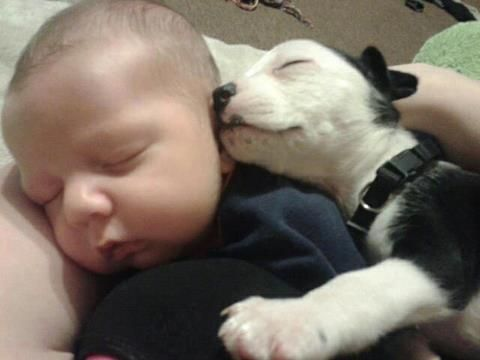 A Pittbull doing its true purpose, Loving and caring for Children.