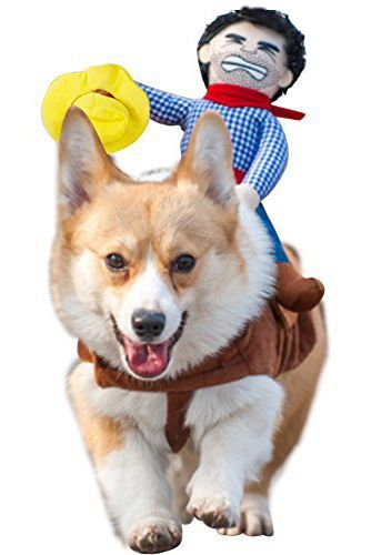 34 Creative Halloween Costumes for Pets Any Excuse for a PARTY - cute cat halloween costume ideas