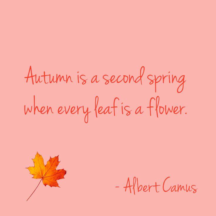 Hello Autumn! #automne #autumn #quote #citation #Camus #flower #