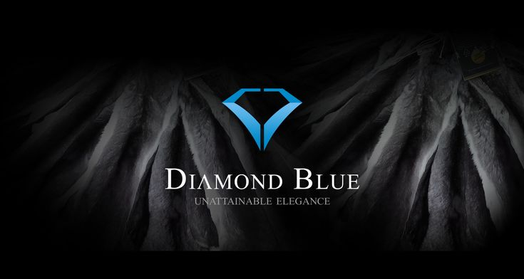 With dedication and many years of devoted work of our expert team, we have developed a special processing technology of chinchilla skins-Diamond blue technology. With this method of work is obtained recognizable bluish color that gives our products a unique quality.