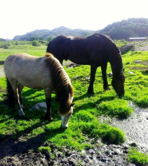 Hestens behov