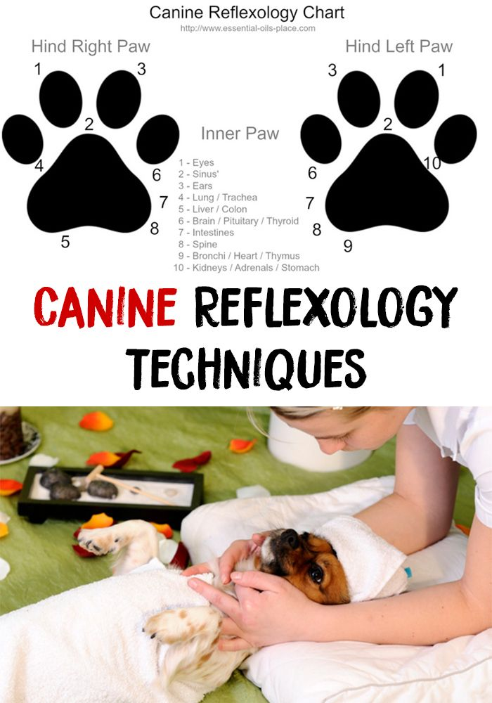 Canine reflexology is amazing! Canine Reflexology is a new concept and basically means reflexology applied on animals. Learn Canine Reflexology Techniques!