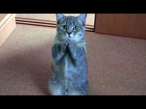 Угарные, сумасшедшие и умные животные выкладываются на полную! 2 / Czy animals! (Fun) 2. - YouTube