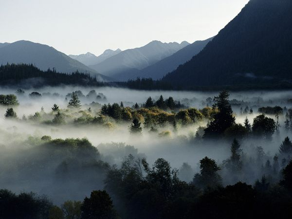 Olympic Mountains, Washington   by Sam Abell  A heavy fog fills a valley in the Olympic Mountains of Washington State. Created from ancient seafloor, the mountains are not very high—Mount Olympus is only 8,000 feet (2,400 meters) above sea level—but they include more than 200 glaciers