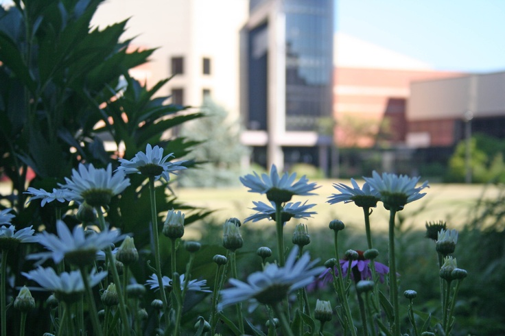 Building E and the flowers
