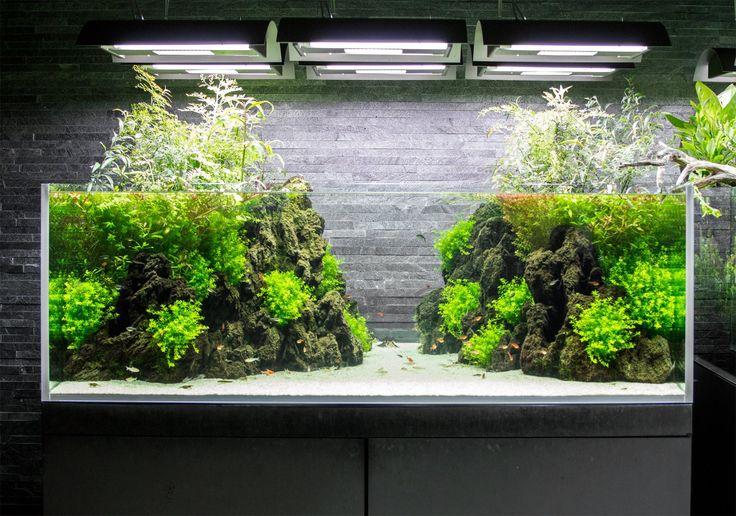Plantados acuaticos #AquariumTanksIdeas