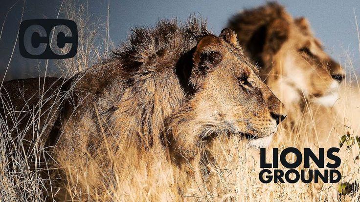 TSAVO MAN-EATERS: Why the TSAVO lions ate so many people?