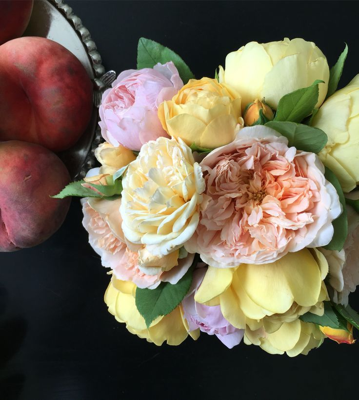 David austin rose and peach for my guest