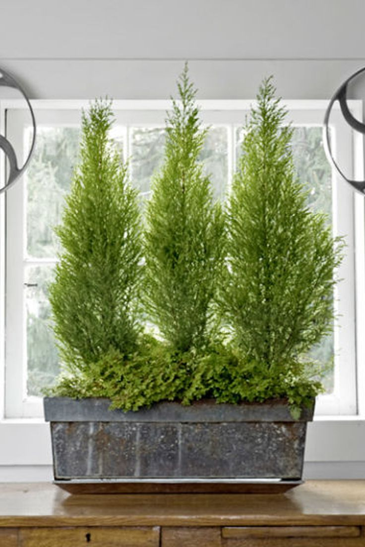15 unique indoor plants that will liven up your home