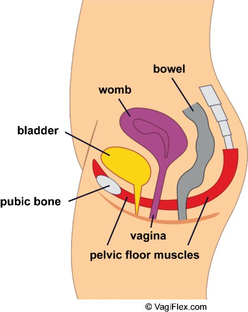 """""""So, uh, I've got a hypertonic pelvic floor and I want to tell you about it."""""""