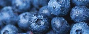 Growing Blueberries, garden.usu.edu, Utah State University Extension