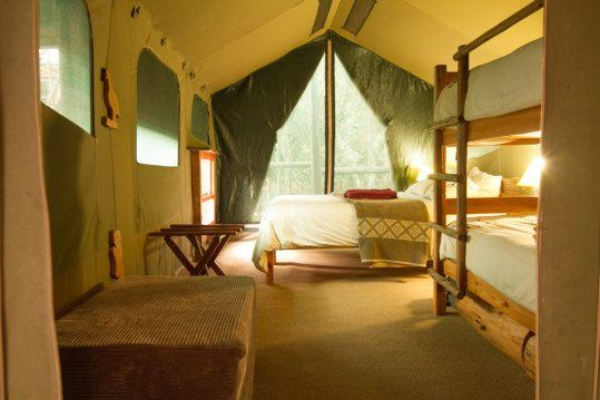 Single bedroom family tree houses designed to be toddler friendly. They have fully equipped kitchens, large bathrooms and great views.