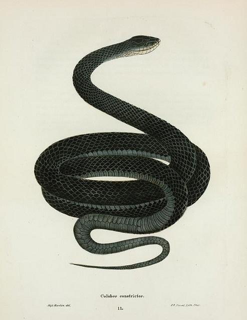 73 best Snake illustrations images on Pinterest | Snakes ...