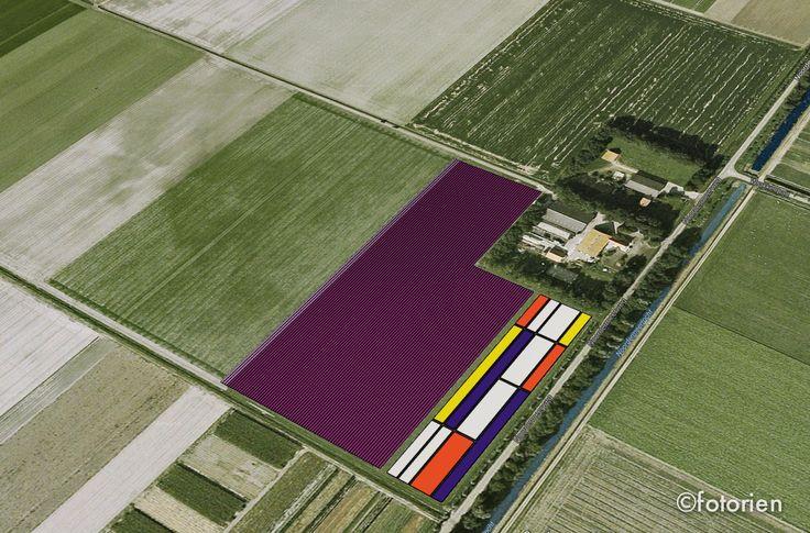 Mondriaan tulpenveld De Noordoostpolder