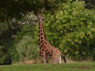 ANIMALES HERBÍVOROS Y CARNÍVOROS | Académica