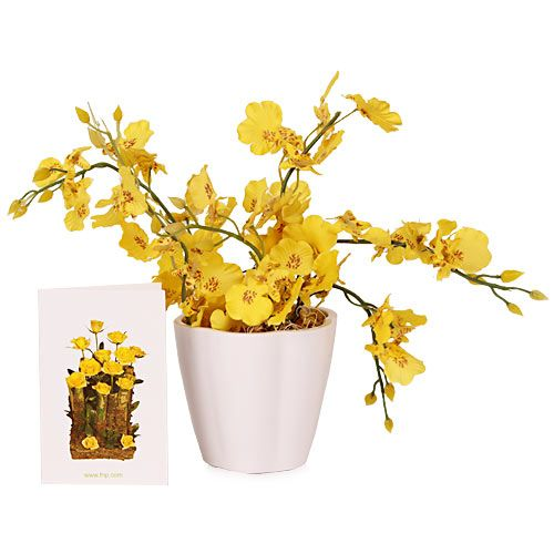 Plant Gifts @Bookmyflowers.com